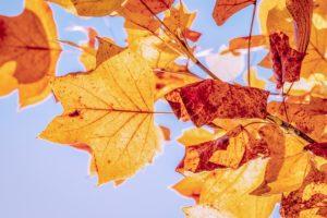 fall news
